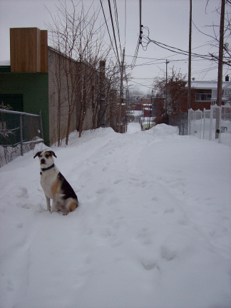 Elliot in a ruelle before going down the slope from Sherbrooke St.
