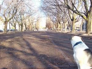 Elliot dans le Parc Médéric-Martin (en mars 2009)